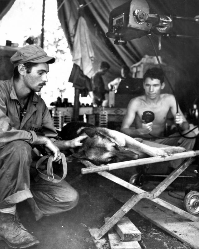 Американский морской пехотинец гладит свою собаку, смертельно раненую японским снайпером на острове Бугенвиль (Соломоновы острова). Бугенвиль, Соломоновы острова. 1944