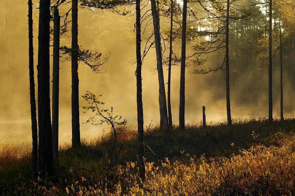 Осень в Карелии. Автор – Виктор Журавлёв