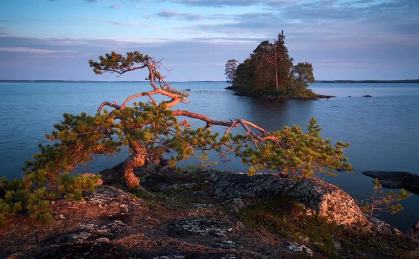 «Бонсай в Карелии». Энгозеро, маленький остров, Карелия. Автор – Алексей Харитонов