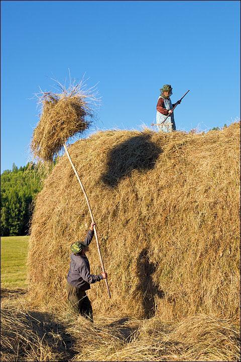 Скошенную и подсушенную траву собирают в зароды – так вся Сибирь называет стога. Укладка их – дело ответственное: сено должно лежать равномерно и плотно, чтобы не развеялось ветром и не проквасилось дождем. Верхний Шивей