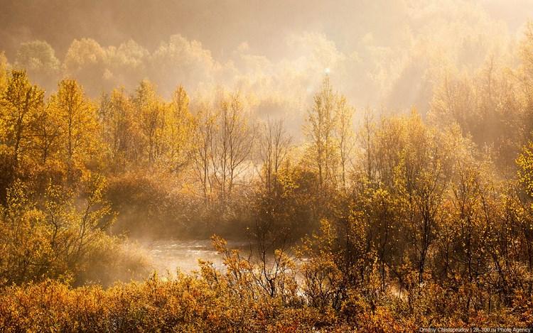 Осенний лес. Фото Дмитрия Чистопрудова