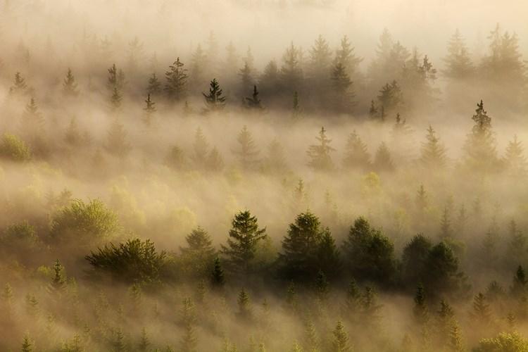 Туманные пейзажи. Фото: Martin Rak
