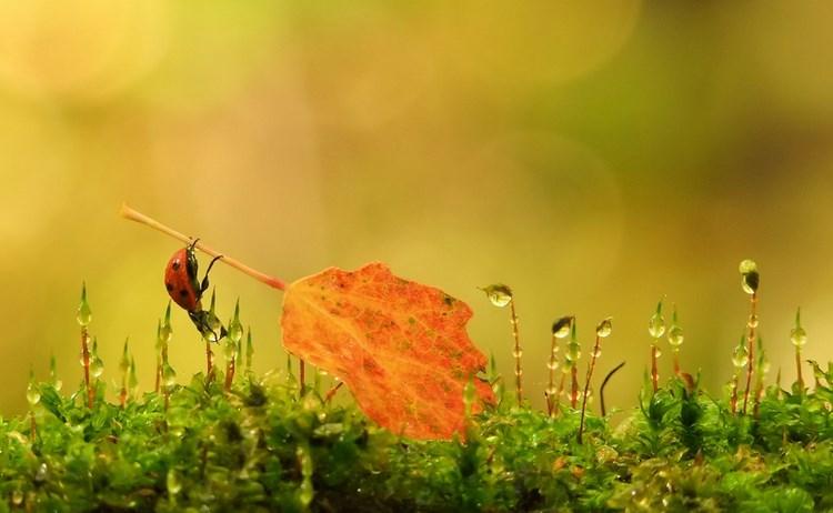 Фото: Вячеслав Мищенко. Желтые листья