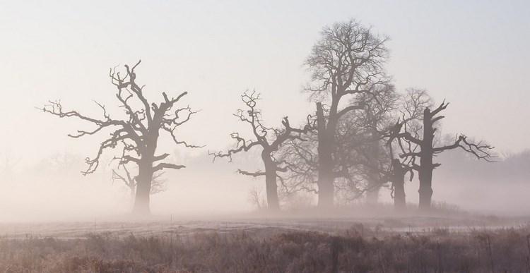 Туманные пейзажи. Фото: pkarwski