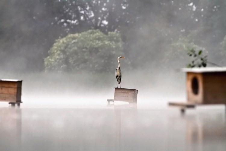 Туманные пейзажи. Фото: Michal Kočan