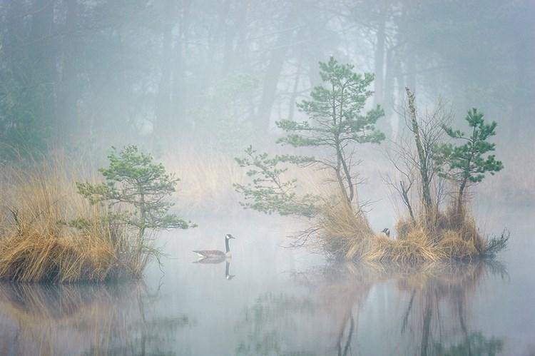 Туманные пейзажи. Фото: Andrew George