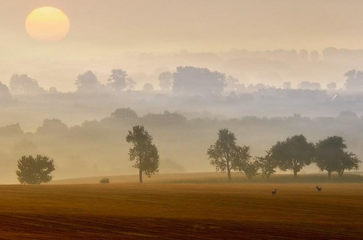 Туманные пейзажи. Фото: Piotr Krol