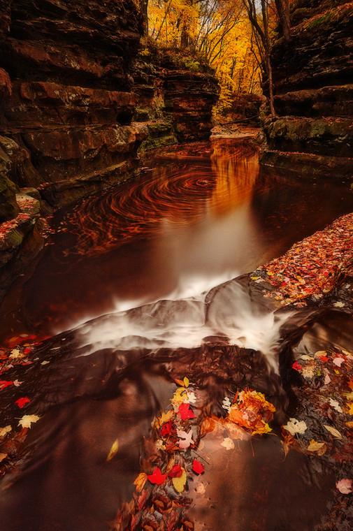 Осенняя природа. Фото: Matt Anderson