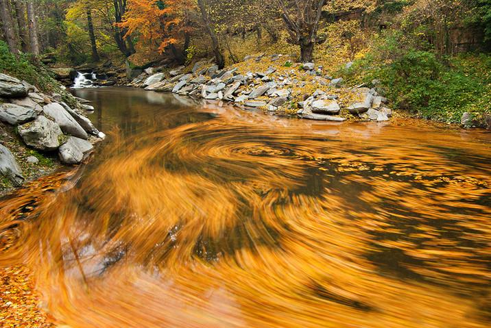 Осенняя природа. Фото: Stela Tasheva