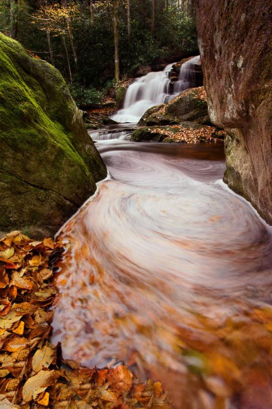 Осенняя природа. Фото: Navin Sarma