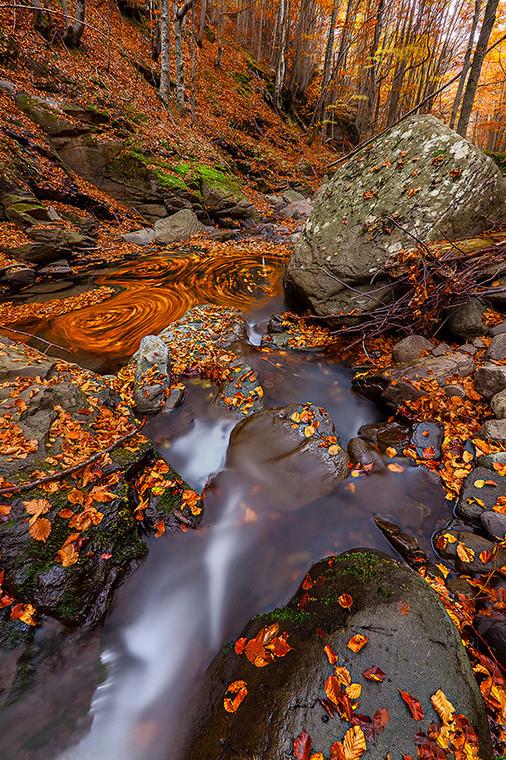 Осенняя природа. Фото: Davide Ferrari
