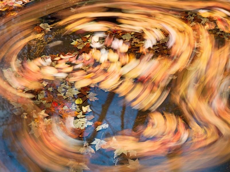 Осенняя природа. Фото: Steven Friedman