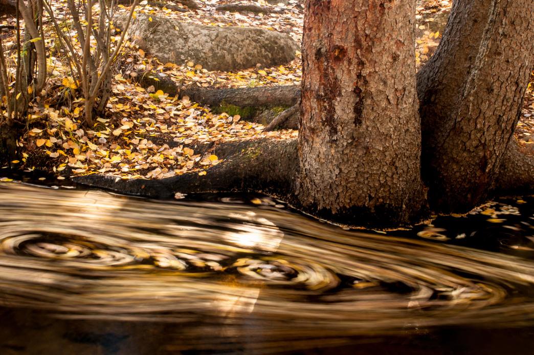 Осенняя природа. Фото: Chris D'Ardenne