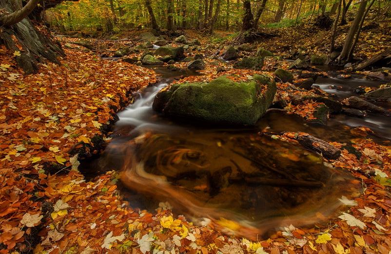 Осенняя природа. Фото: Patrick Konig