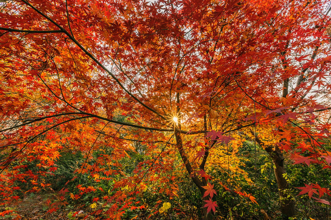 Национальный парк Gongqing. Фото: Elysee Shen