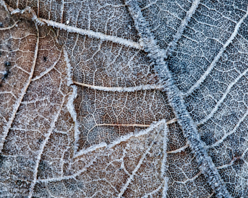 Автор фото: Kirsten Karius. Замороженный лист