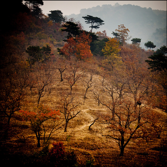 Вид с участка Великой Китайской стены Мутяньюй. Фото: Philip Gann