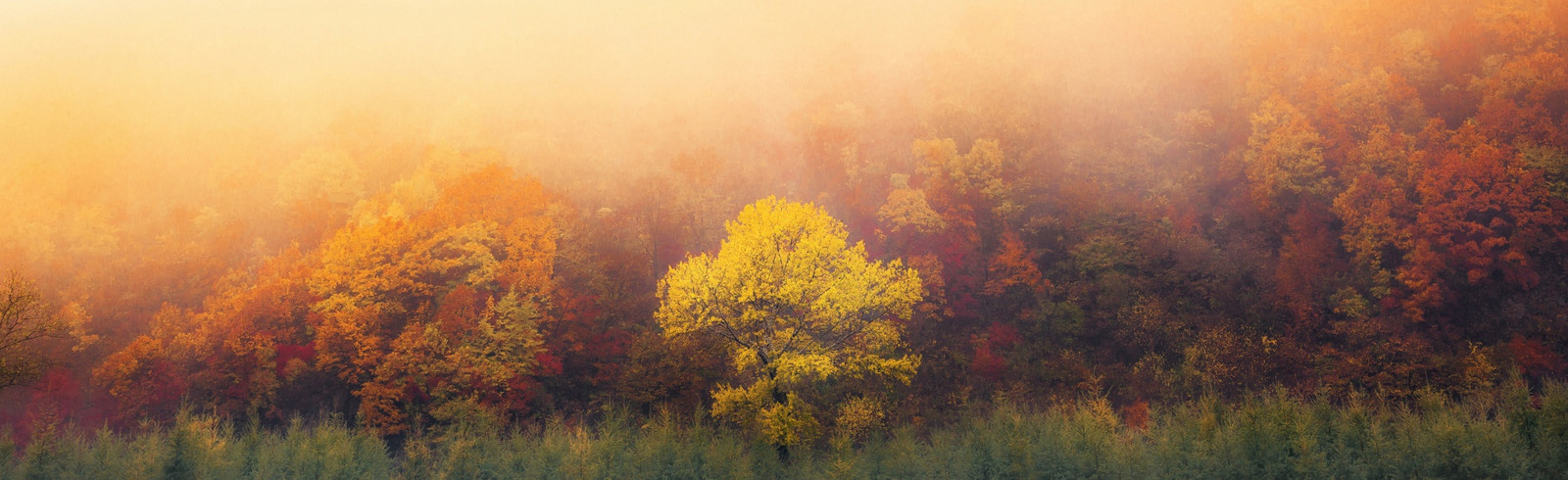 Национальный парк Huangcangyu. Фото: Forest Chou