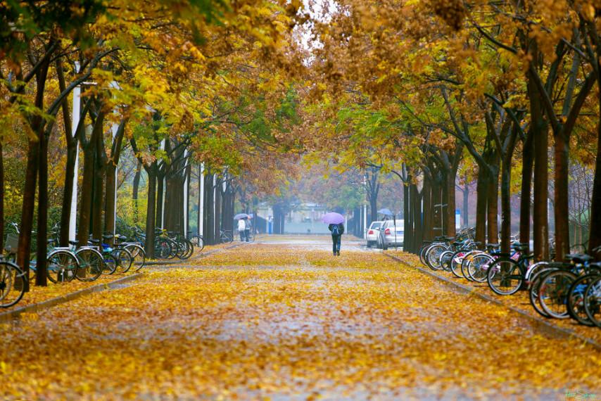 В окрестностях университета Xidian. Фото: HuiShouMYS