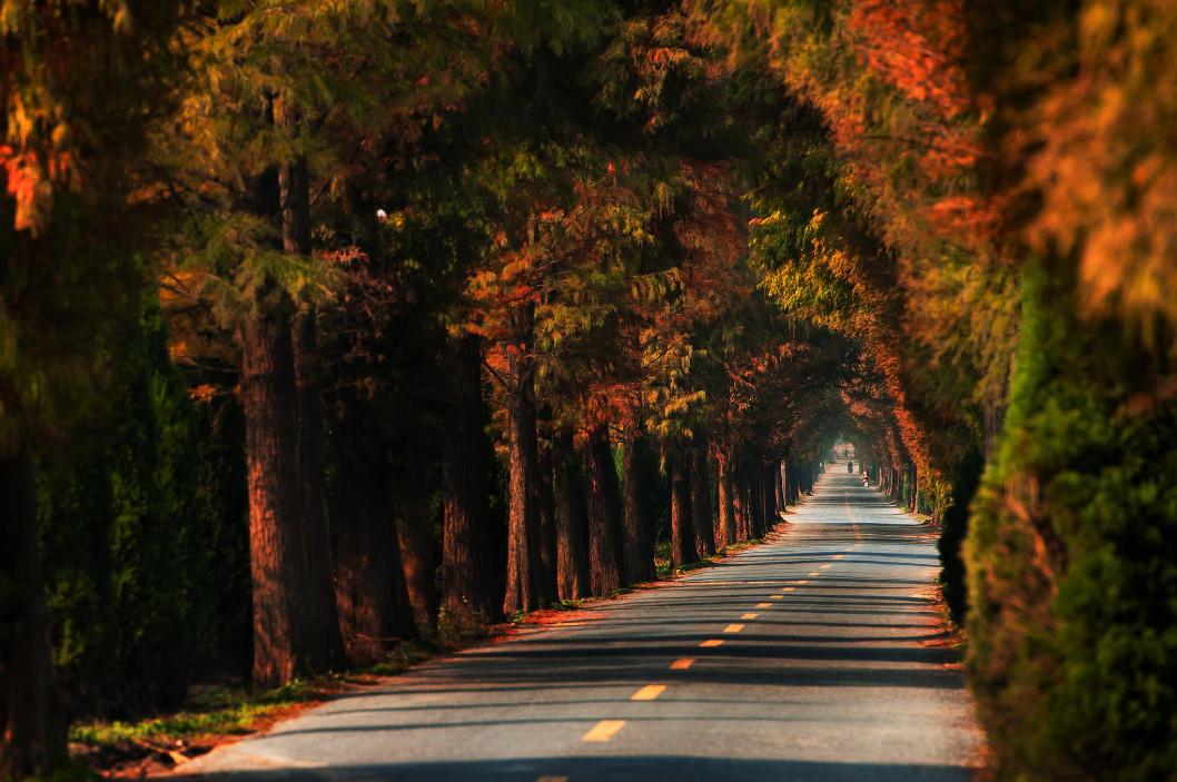 Дорога через парк в городе Ханчжоу. Фото:  Yuhan Liao