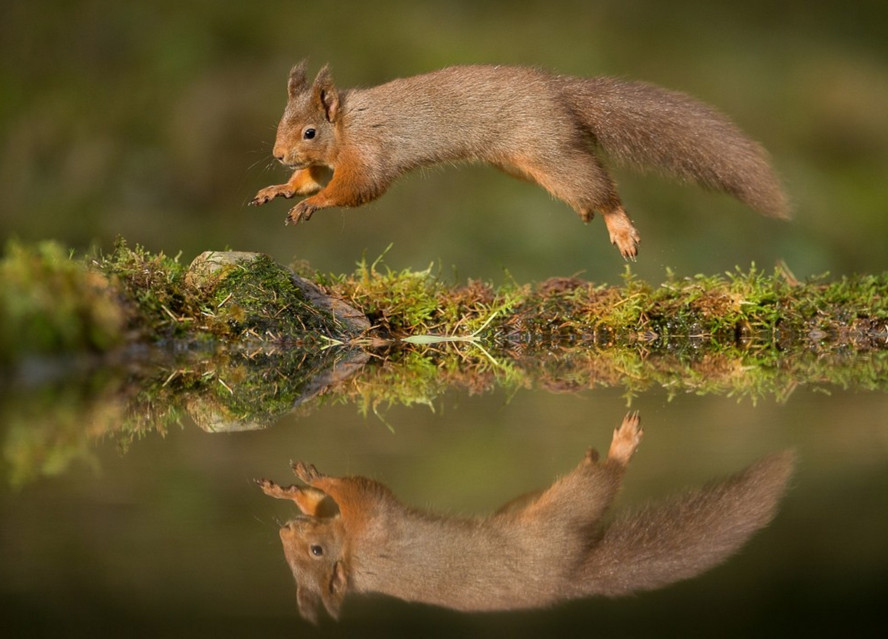 Фото: Simon Phillpotts