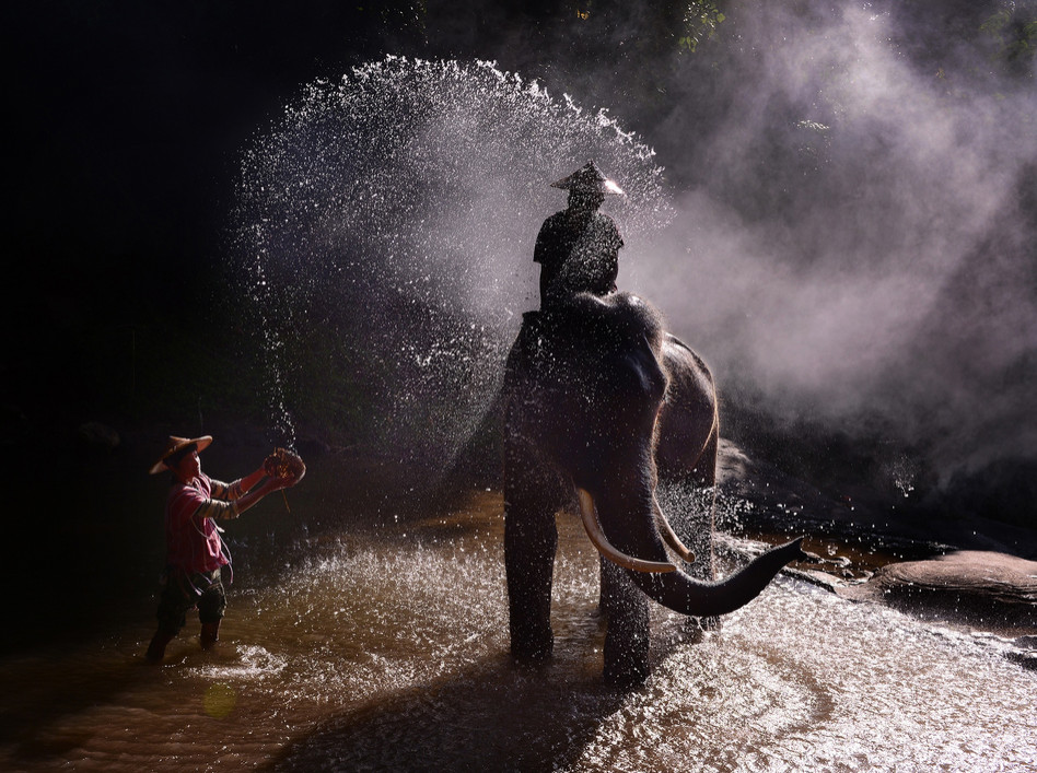 Тайская жизнь. Слон.  Фото: Weerapong Chaipuck