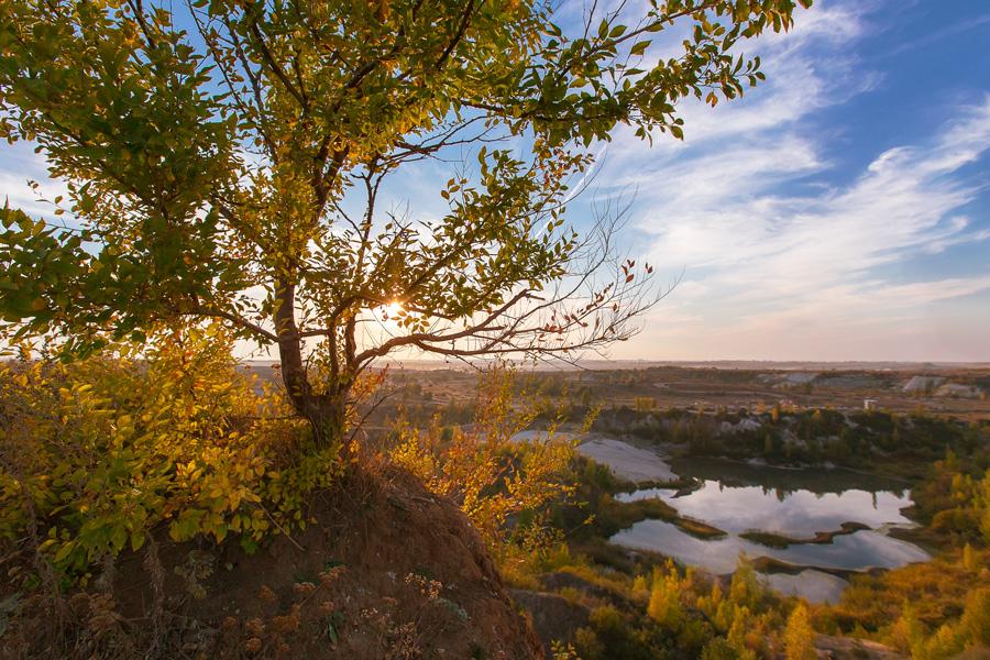Золотая осень. Фото:  Ольга Кардашева