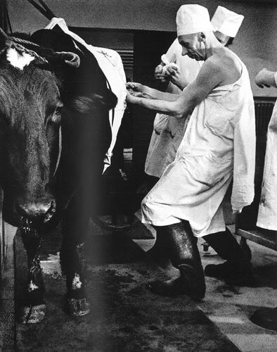 Александрас Мацияускас, из серии «Ветеринарные клиники»