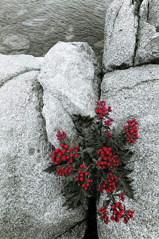 Раскрашенное от руки черно-белое фото. Фото: Виргилиус Шонта