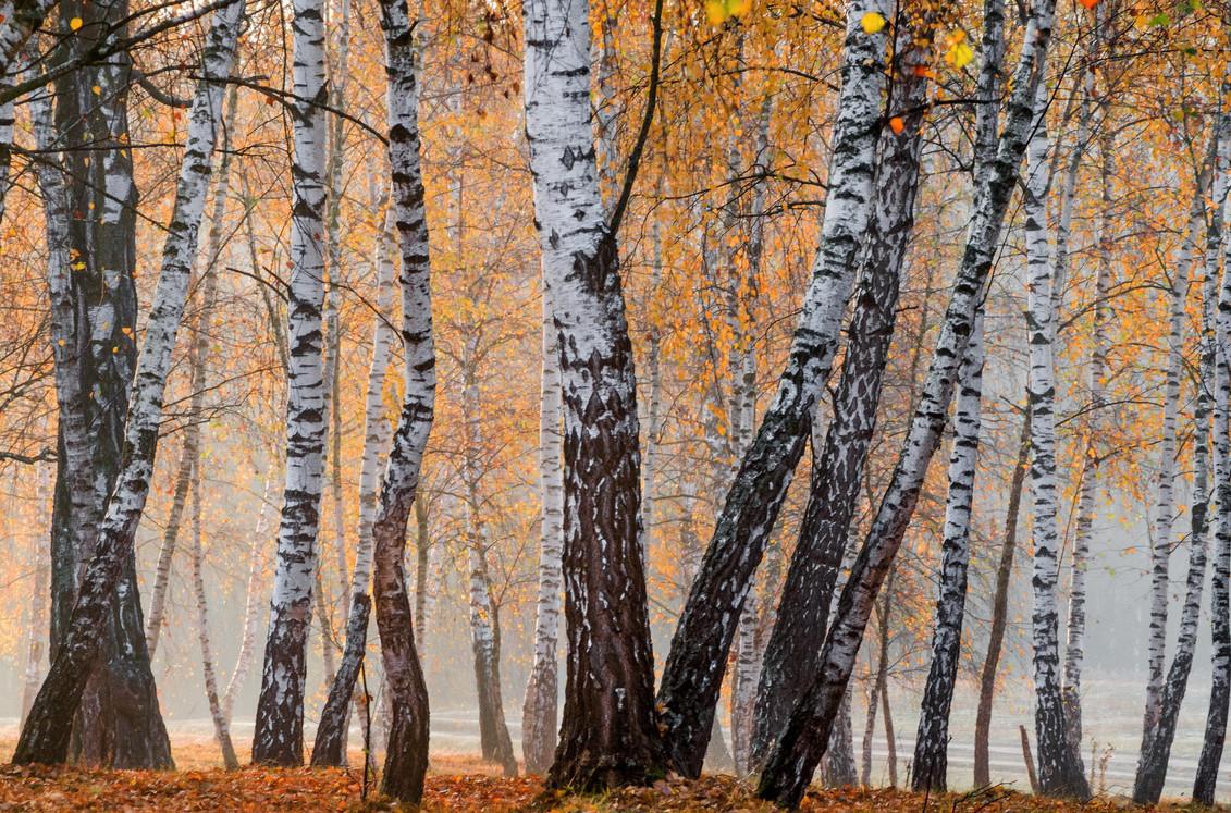 Скачать раскидал осенний лес рубли целковые т н хренников mp3 в.