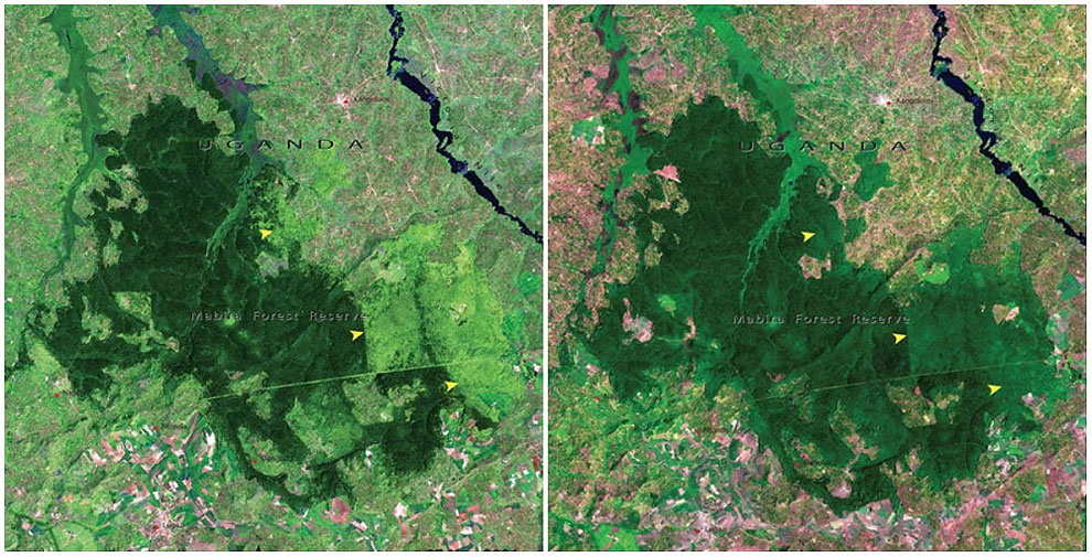 Mabira Forest, Uganda. November, 2001 — January, 2006.
