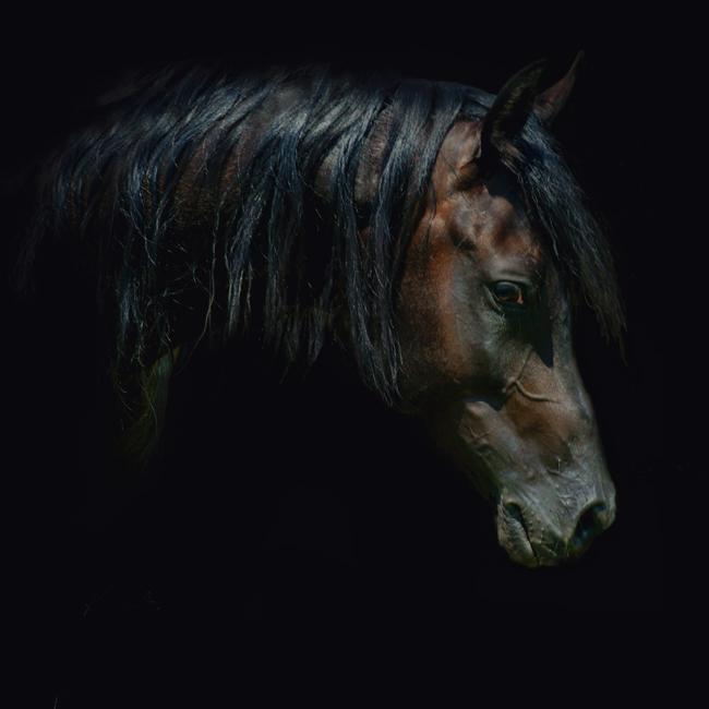 Фото лошади пегас