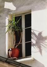 8. «Окно  с пальмой»  Из серии «Окна». Скользящий вдоль стен свет солнца отбросил на плоскость стены тень пальмы. Без нее снимок был бы совершенно неинтересным. #13;#10;Камера Fujifilm FinePix S2 Pro. Объектив Nikkor 80-200/2,8. Чувствительность 100 ASA. Выдержка 1/250 сек.  Диафрагма 5,6.