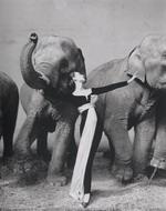 Ричард Аведон. Довима со слонами